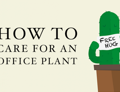 How to Care for an Office Plant